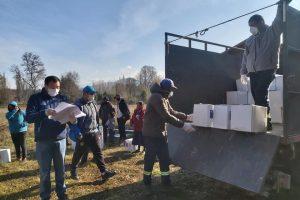 Exitosa entrega de canastas de alimentos supera el 80 % en Pucón